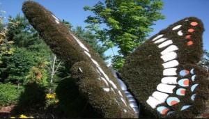 jardin mariposa-blume schmetterling